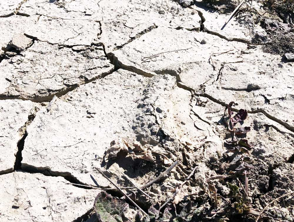 Albariza soil crust