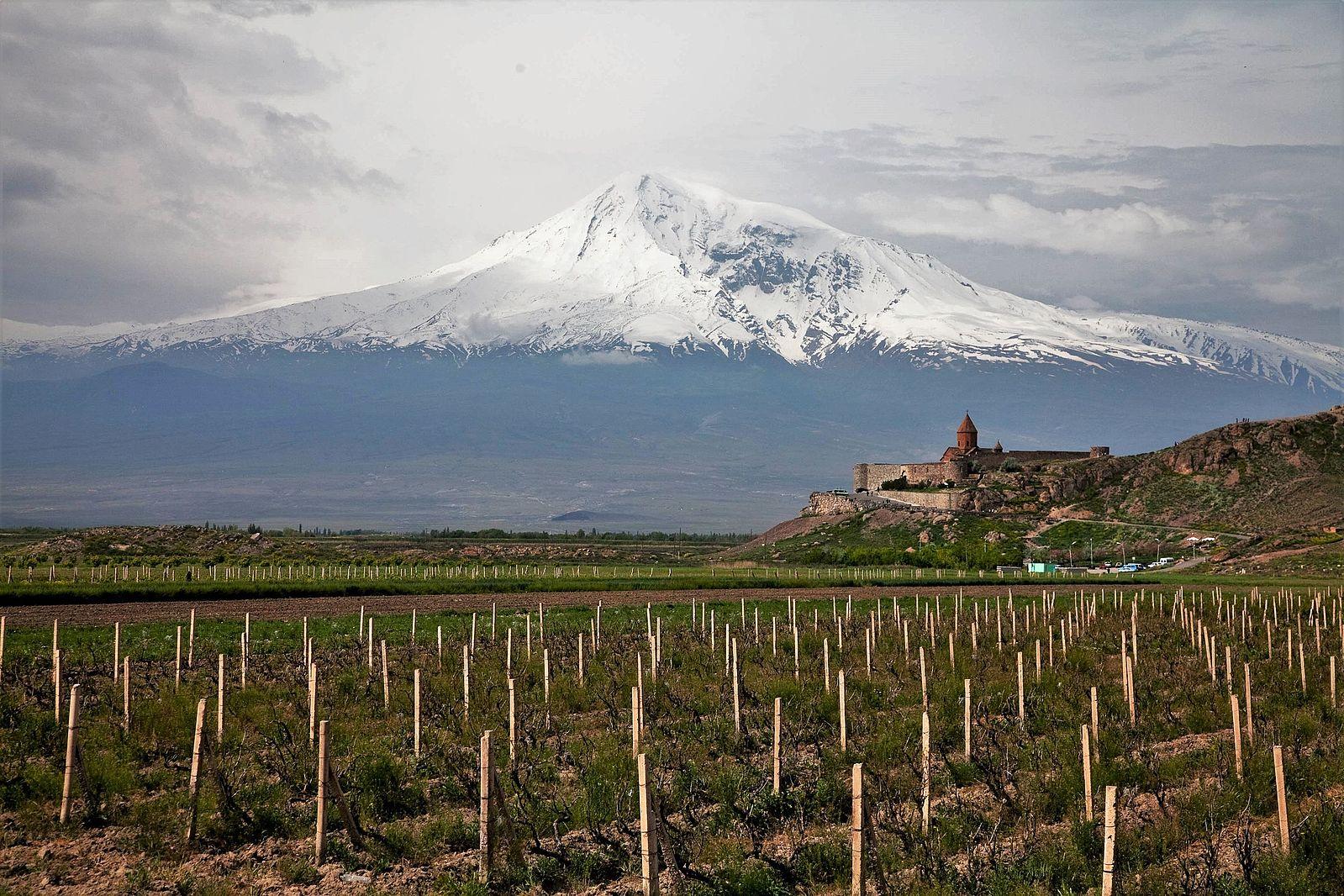 Armenia wine vineyard. Mount Ararat in the background