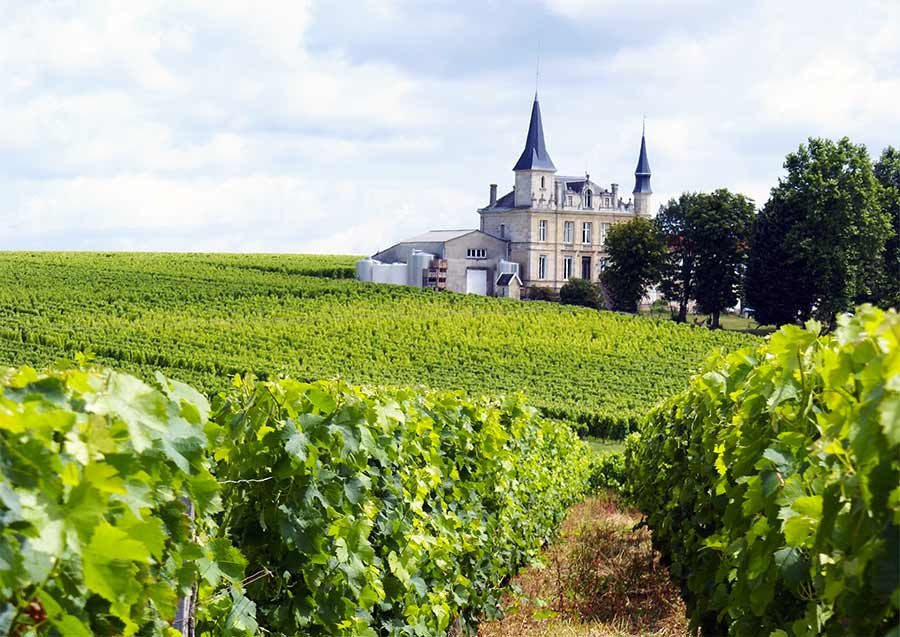Vineyard in Bordeaux and a chateau in the background