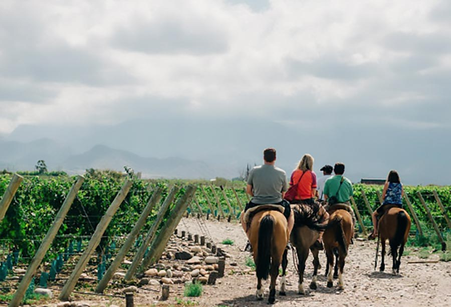 Horse riding in vineyards in the Uco Valley
