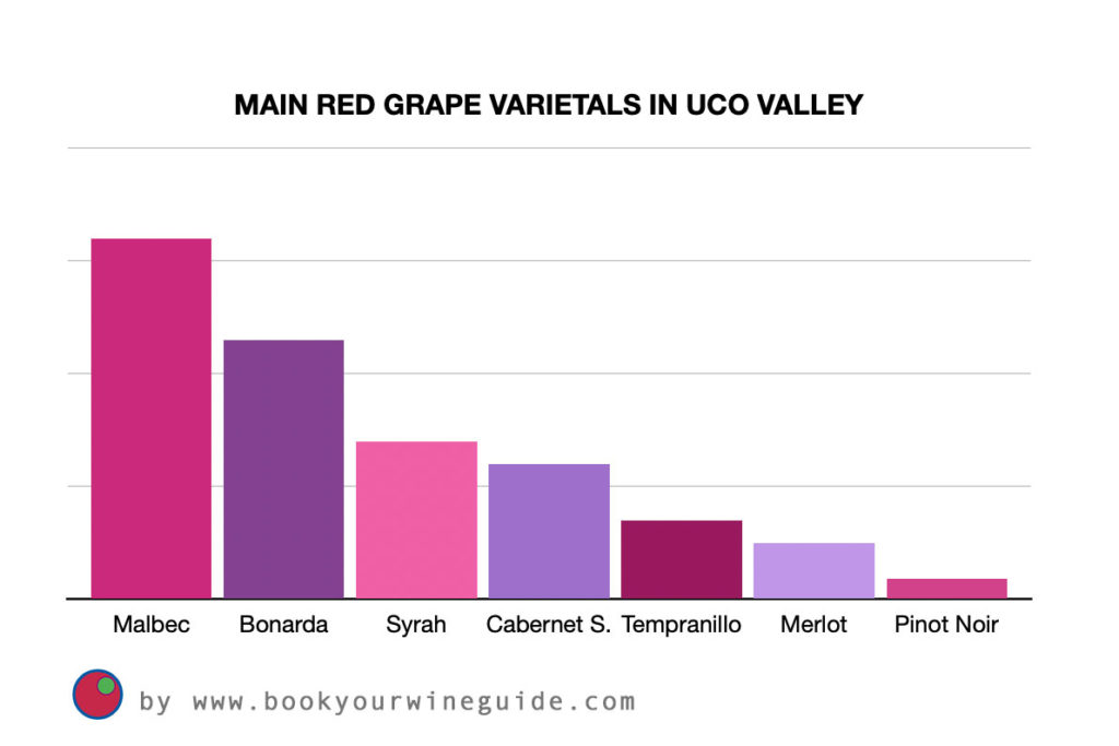 Main red grape varietals in Uco Valley